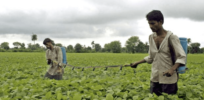 Indian farmers growing unapproved herbicide-resistant GMO soybeans, farmers union says