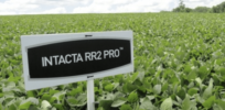Brazil farmers group asks court to cancel Monsanto GMO soybean seed patent