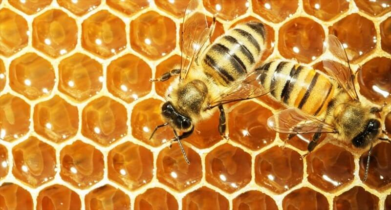 Working bees on honey cells Shutterstock x