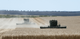 Y Mingenew wheat harvest