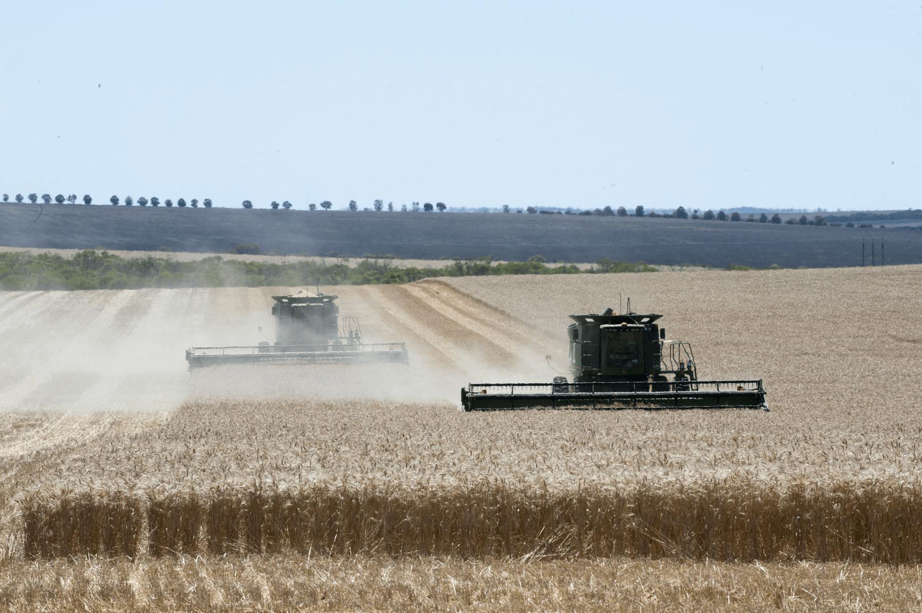 Y Mingenew wheat harvest