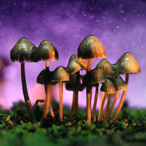 a psychedelics expert says magic mushrooms will be approved for depression by heres why