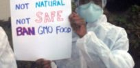 Is it true there are no long term GMO safety studies?