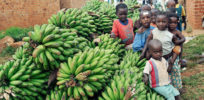 Passage of Ugandan biotech law opens access to vitamin-fortified, disease-resistant crops