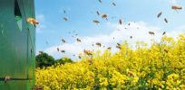 Scientists warn EU policymakers that farm pesticides could be to blame for insect declines