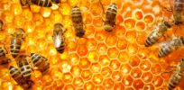 Trace amounts of neonicotinoid pesticides found in 75% of honey samples worldwide—'far below' levels dangerous to humans