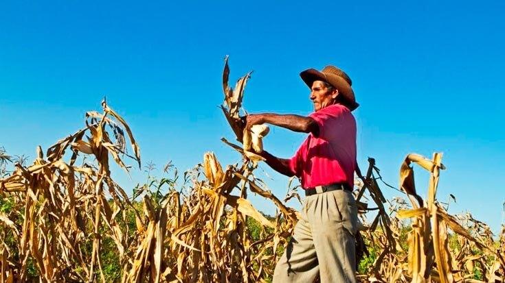 bo bolivian farmer result x
