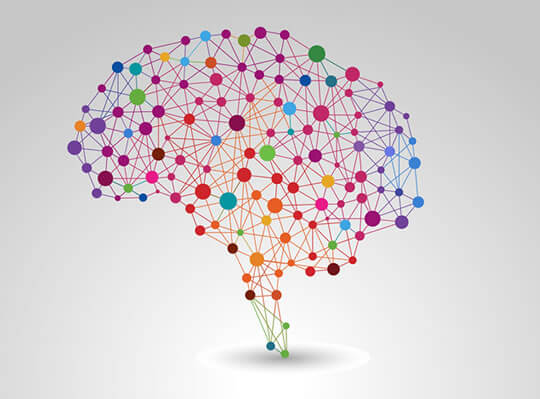 Brain Flexibility Could Help Explain Why People Learn Differently