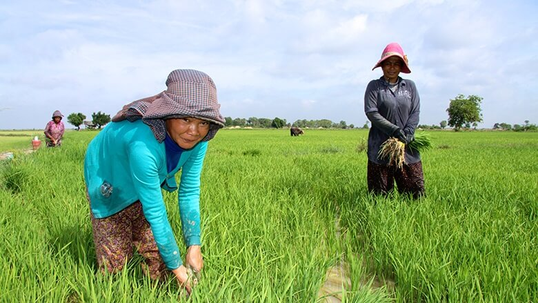 cambodia agr