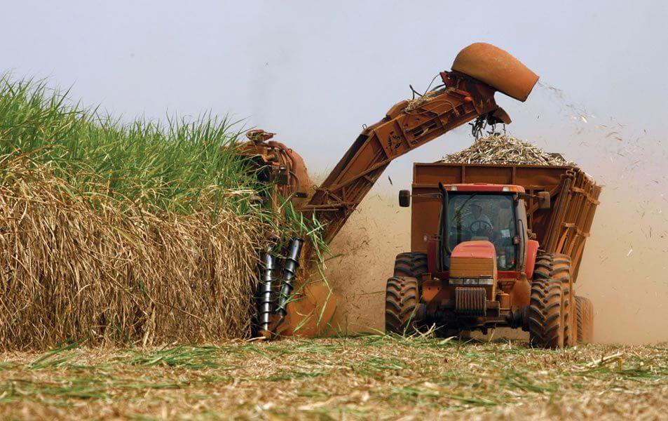 With GMO insect-resistant sugarcane approval, Brazilian farmers