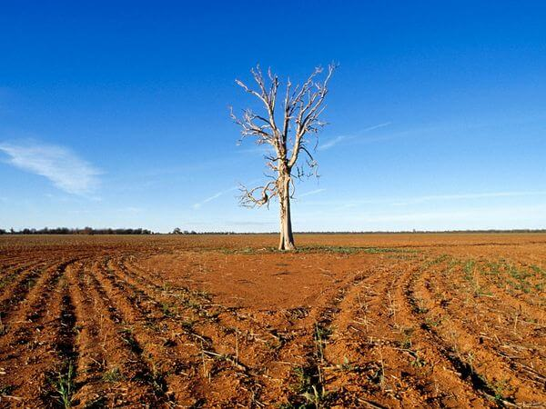 climate drought tree x