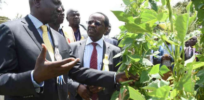 Newly elected government poised to open door to GMOs in Kenya