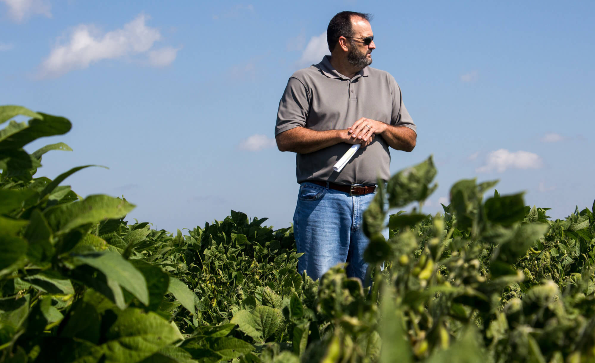 Weed scientists criticize Monsanto for mishandling dicamba herbicide rollout, drift crisis