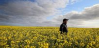 Australia imports over 60 GMO food crops—but farmers can only grow one