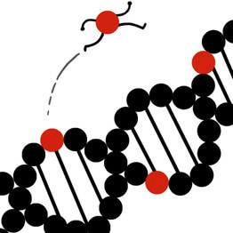 fli jumping genes