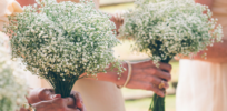 Kenya could become first country to approve GMO bridal bouquet 'baby's breath' flowers