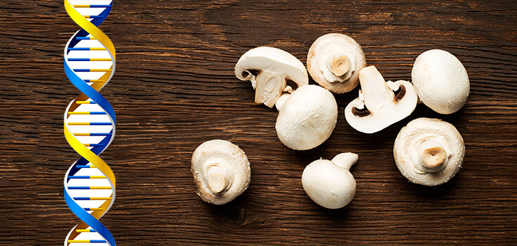 food white button mushroom dna gmo