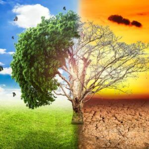 global warming climate change tree big stock x