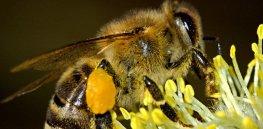 honey bee on flower e