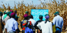 Video: Successful Kenya GMO corn field trials show 40% yield increase compared to conventional corn