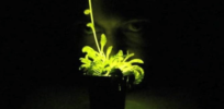 After Glowing GMO plant Kickstarter failure, biotech company makes scented GMO moss