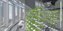 lettuce vertical
