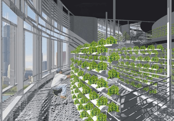 a research proposal on the feasibility of vertical farming in local urban settings Thus, vertical farming, if successfully implemented, offers the promise of urban renewal, sustainable production of a safe and varied food supply and the eventual repair of ecosystems that have been sacrificed for horizontal farming.