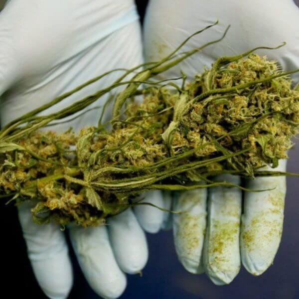 medical marijuana x e