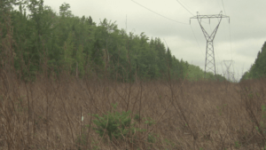 nb power sprays transmission lines