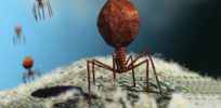 Why viruses, like Ebola and deadly flus, are not 'living'