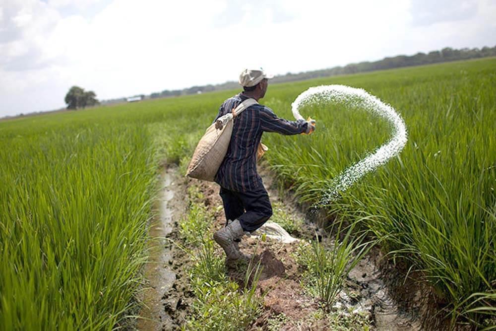 pakistani farmer