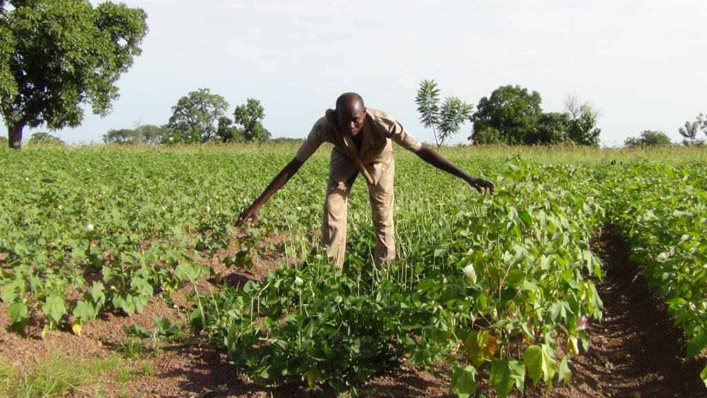 With approval to plant GMO insect-resistant Bt cowpea, Nigerian farmer says her nation can lead Africa's biotech 'revolution'