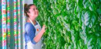 plenty vertical farm e