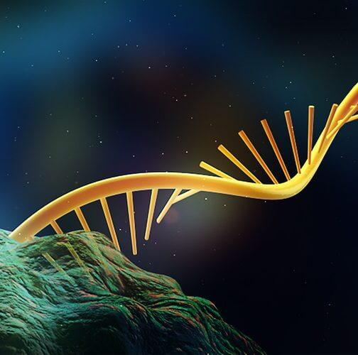 Fluoride flipping: Hidden RNA regulator could help create new antibiotics