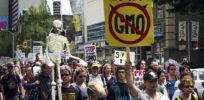 New Zealand farmers group drops lawsuit, paving way for local GMO bans