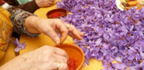 Is saffron a cancer-fighting 'super food'?