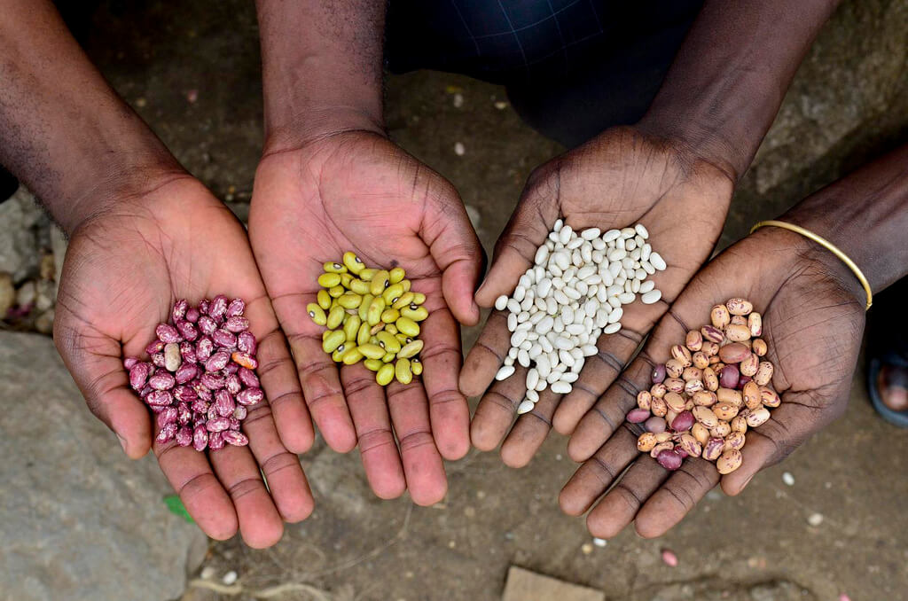 seedsystem photo seeds in hands photo CIAT