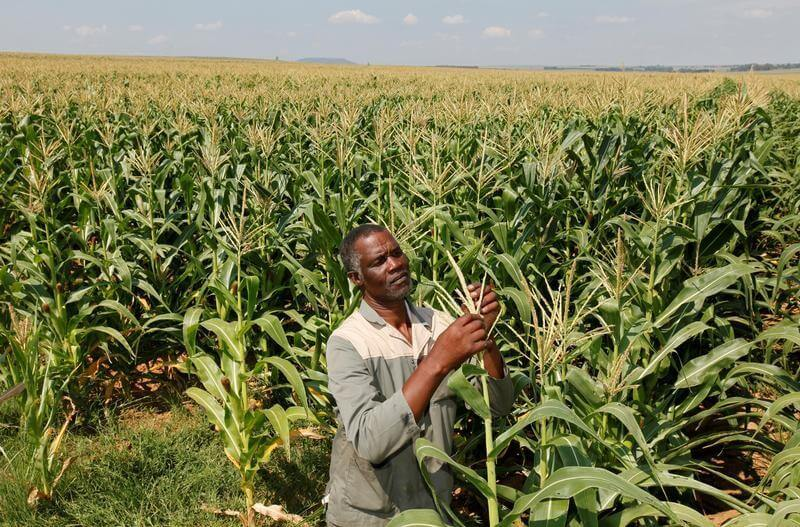South Africa urges neighboring countries to learn from its success with biotech