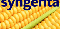After settling with farmers, Syngenta turns attention to Cargill, Archer Daniels Midland GMO corn lawsuits