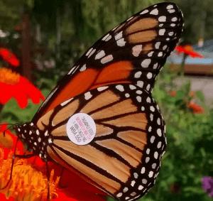 taggedbutterfly