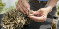 Bio-weapons for good: Chemicals and genetics could battle havoc-creating zebra mussels