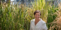 Women in science: Geneticist Pamela Ronald, developer of GMO flood-resistant rice