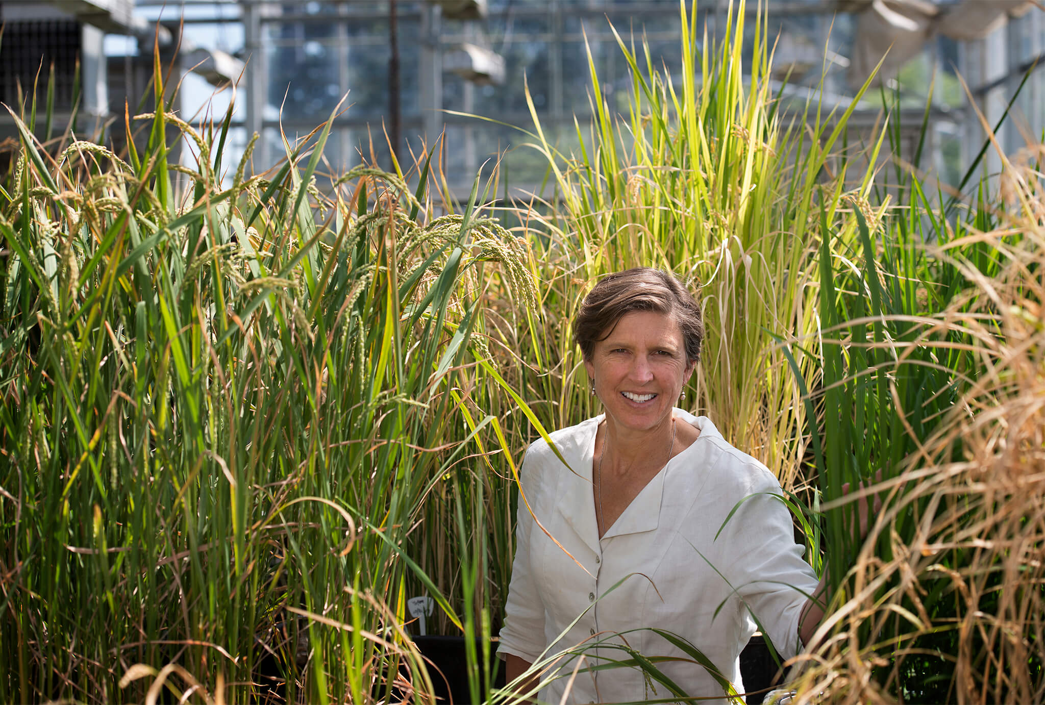 Women in science: Geneticist Pamela Ronald, developer of GMO flood-resistant rice