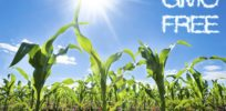 Economist: EU's GMO crop ban likely led to lower corn, soybean yields in Europe compared to US