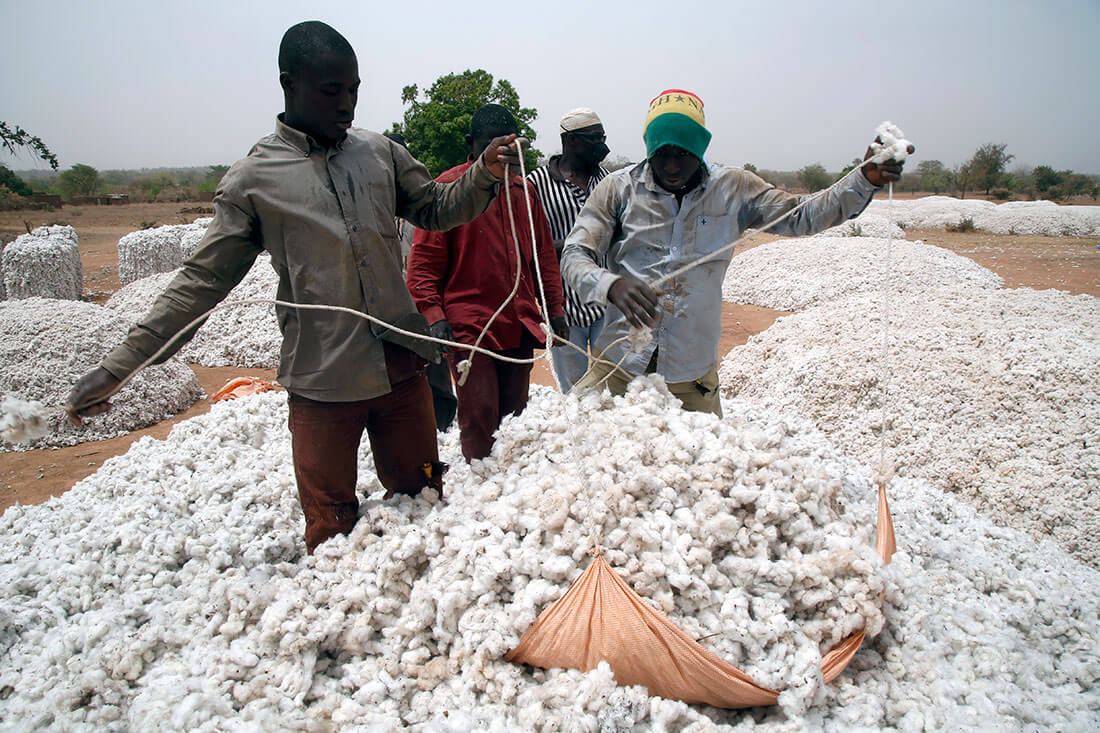 Quantity vs quality: Burkina Faso's problems with Monsanto's insect-resistant GMO Bt cotton