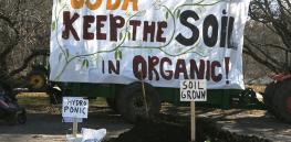 Organic movement schism? Fight over hydroponics puts $50 billion industry in limbo