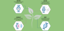 Will new wave of gene-edited crops ease public fear of GMO food?