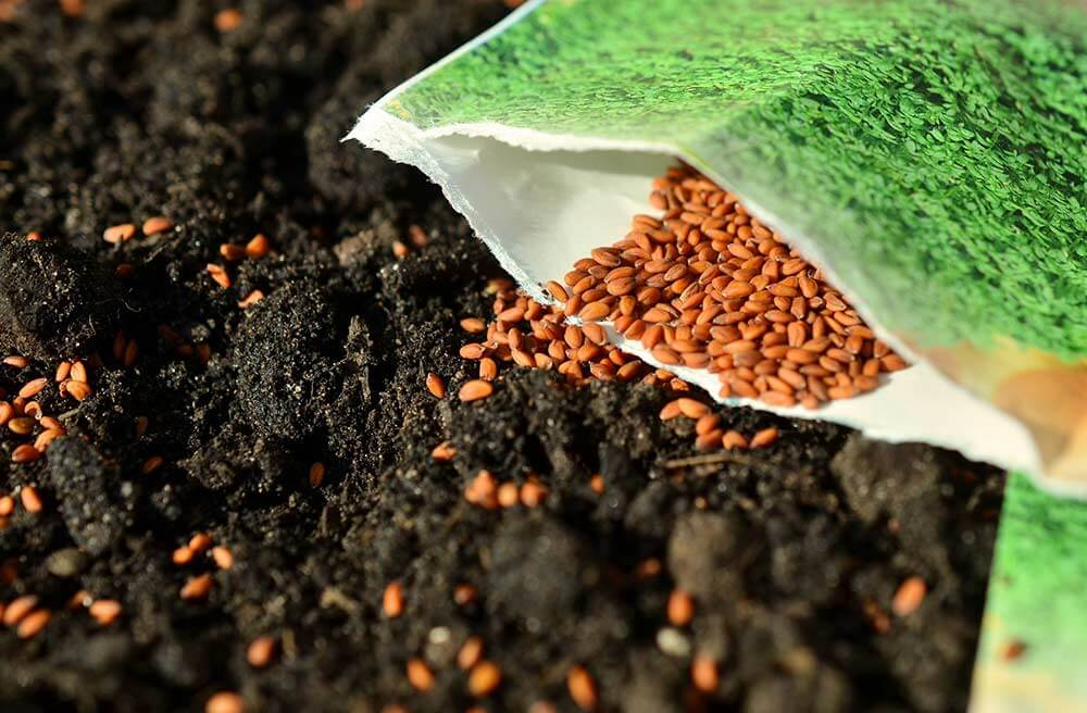 Talking Biotech: How will agricultural-biotech seed company