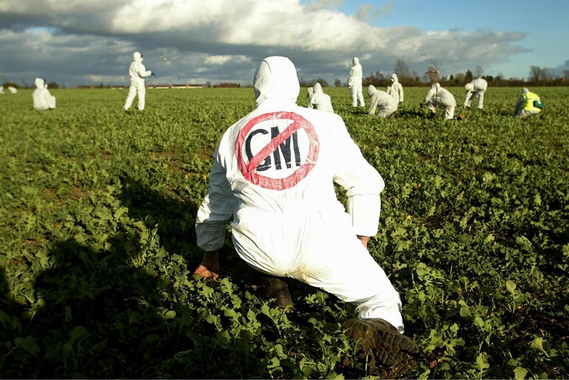 anti gm demonstrators in an oilseed rape crop