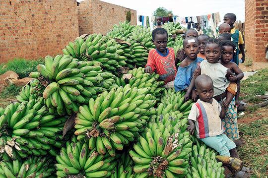 bananas bring hope